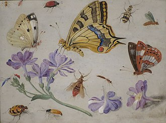 Jan van Kessel the Elder - Butterflies, other insects and flowers
