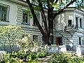 Дуб черешчатий памятка природи Будинок вчених.jpg