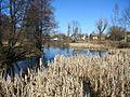 Заростающий пруд - panoramio.jpg