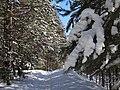 Зимний лес в студгородке ПГТУ - panoramio.jpg