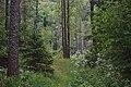 Летний лес.jpg
