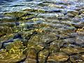 Озеро Узун-Кёль 3.jpg