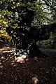 Плана - ЗЗ по директивата за местообитанията – ZZ1307 – вековното дърво до връх Манастирище - No2.jpg