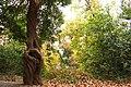 Самшит в парке, Утёс, Крым.jpg