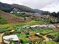 Сельскохозяйственность - panoramio.jpg
