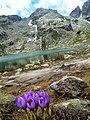 Страшното езеро - panoramio (9).jpg
