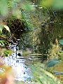 Троицкий ручей (вверх по течению от 23-го квартала) 2.jpg