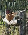 Фото путешествия по Беларуси 064.jpg