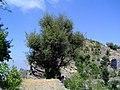 الغول ـ جبل ميراب ـ محافظة تعز - panoramio.jpg