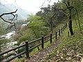フクジュソウ自生地にて 2012.2.24 - panoramio.jpg