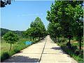 乡村路 - panoramio (2).jpg