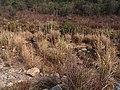 南洋溪 - Nanyang Creek - 2014.01 - panoramio (1).jpg