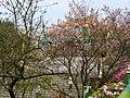 天元宮 Tianyuan Temple - panoramio (14).jpg