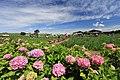 小岩菖蒲園 - panoramio (8).jpg