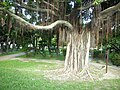 白色恐怖政治受難者紀念碑附近老樹 - panoramio.jpg