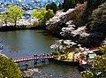 茂原公園桜風景.JPG