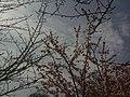香川県丸亀市丸亀城 - panoramio (56).jpg