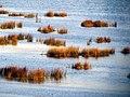 115 Reeds Lake Titicaca Peru 3265 (15179691031).jpg