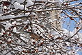 13-02-09 Nemo Snowstorm (Unedited) (79) (8467242960).jpg