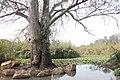 160213 Yarkon springs natural view river trees sky (7).jpg