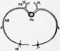 1911 Britannica - intercostal arteries.png