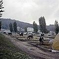 1960 Parc à taureaux du CNRZ Cliché Jean-Joseph weber-4.jpg