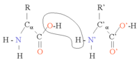 Two amino acids