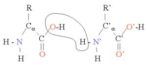 varför aminosyror