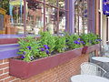 2007 windowboxes LancasterPA 556903940.jpg
