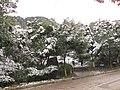 2010年12月15日夜里的那场雪 - panoramio (5).jpg