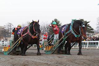 Banei Kinen Japanese horse race