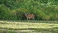 2012 Photo Contest - Wildlife Category (7944944942).jpg