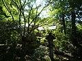 20131014 19 Kyoto - Higashiyama - Shoren-in Temple (10512590454).jpg