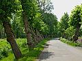2015-05 ND Schiefe-Lindenallee Alt-Barenaue 01.jpg