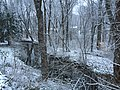 2016-01-17 16 52 33 A light wet snowfall on trees along the West Branch Shabakunk Creek in Ewing, New Jersey.jpg