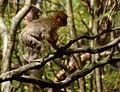 2016-04-21 13-51-21 montagne-des-singes.jpg