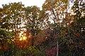 2016-11-25 Yashiro forest park,やしろの森公園 母屋 紅葉、柿木、夕陽 DSCF6134☆彡.jpg