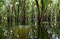 20171129 Mangrove forest Tonle Sap 6016 DxO.jpg