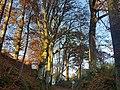 20201106 ND Hohlwegallee bei Holzen Winhöring 1.jpg