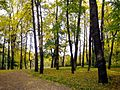 364. St. Petersburg. Elagin Island. Park near the 4th North Pond.jpg