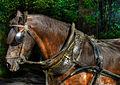 3dark brown horse2 (8218632221).jpg
