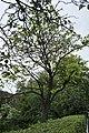 68-104-5041 Кам'янець-Подільський.jpg