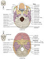 707 Superior-Inferior View of Skull Base-01.jpg