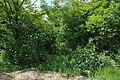71-203-5001 Monastyrok SAM 9855.jpg