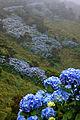 Açores 2010-07-20 (5068663900).jpg