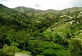A Green Photo of Shalkani.jpg