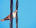 A Wire Bird.jpg