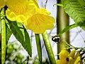A abelha!.jpg
