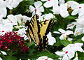 A butterfly on a flower.jpg