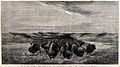A herd of buffalo crossing a river basin on the Upper Missou Wellcome V0021486.jpg